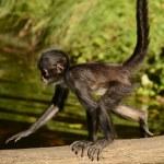 Monkey — Stock Photo #54367089