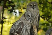 Owl. — Stock Photo