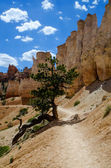 Bryce Canyon - National Park - USA — ストック写真