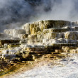 Постер, плакат: Mammoth Hot Springs in Yellowstone