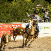 Rodeo competition in ranch roping — Stock Photo
