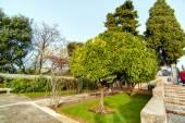 Park Nice, France — Stock Photo