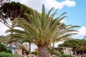 Palm trees on the coast — Stock Photo
