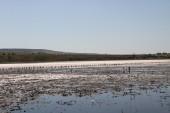 治疗与泥浆的咸水湖 — 图库照片