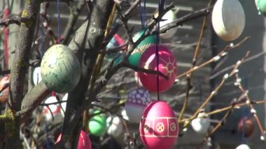 Festive background People decorate painted Easter eggs branches — Stock Video