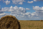 Agriculture straw gathered into a sheaf field harvest sky — Stock Photo