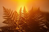 Fern fronds at sunrise — Foto de Stock