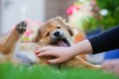 Girls hand pets an Elo puppy — Stock Photo