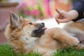 Girl shows her warning finger to an Elo puppy — Stock Photo