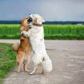 Two dogs caressing each other — Foto de Stock