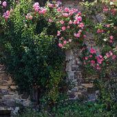 Pittoreska från rosor bevuxen stuga i Bretagne, Frankrike — Stockfoto