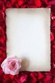 Antique style sheet of paper on a ground of red rose petals — Stock Photo