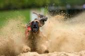 Afghan hound at a greyhound racing — Stock Photo