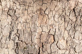 Decorative background texture from a tree bark — Stock Photo