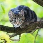 Shy cat sitting on a bracnch of a tree — Stock Photo #54772469