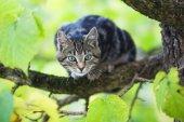 Shy cat sitting on a bracnch of a tree — Foto de Stock