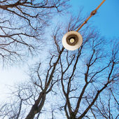 Leafless trees and a street lamp in low angle view — Stock Photo