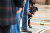 Cute black dog between people — Стоковое фото