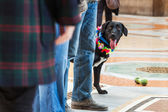 Cute black dog between people — Fotografia Stock