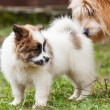 Elo puppy with its mother — Stock Photo #55218767