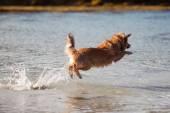 Hond springen in het water — Stockfoto