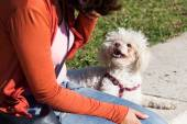 Communication between a cute small dog and a young woman — Foto Stock