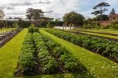 Kitchen garden in the Royal Botanical Garden in Kew, England — Stock Photo