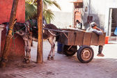 Typical scene of a donkey carriage with a worker in the medina of Marrakech, Morocco — Stock Photo