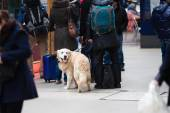 Traveling with a dog at a train station — Stock Photo