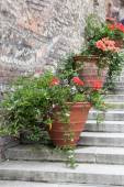 Decorative flower pots on stairs — Stock Photo