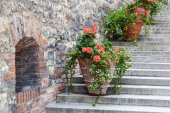 Decorative flower pots on stairs — Foto Stock