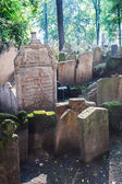 Antique tombstones on Old Jewish Cemetery in the Jewish Quarter in Prague, Czechia — Stok fotoğraf
