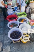 Traditional market stall in Bangkok, Thailand, with fishes, turtles and other animals — Fotografia Stock