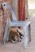 Sleeping stray dog at a temple ruin in Ayutthaya, Thailand — Stock Photo