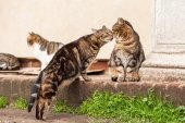 Stray cats cuddle together — Stock Photo
