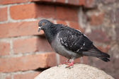 Dove sitting on a stone ball — Stock Photo