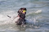 Labrador with a ball in the mouth having fun in the sea — Stock Photo