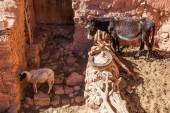 Typical scene in a maoroccan mountain village with a donkey and a sheep — Stock Photo