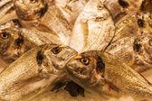 Sea breams at a market stall of a fish market — Foto Stock
