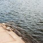 Fishing waiting at the corner of dock — Stock Photo #55413893