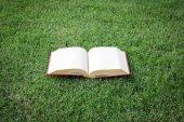 緑豊かな公園でヴィンテージの本を開く — ストック写真