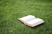 Open vintage book in green park — Stock Photo