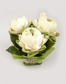 Lotos biały bukiet — Zdjęcie stockowe