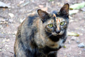 Stray cat watching camera — Stock Photo