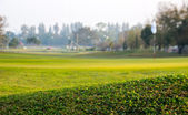 Groene geplaatst voor het spelen van golf — Stockfoto