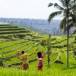 Paddy fields in Bali, Indonesia — Stock Photo #54214931