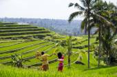 Paddy fields in Bali, Indonesia — Stock Photo