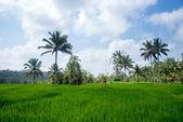 Rural scenes, Bali Island — Stock Photo