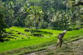 Farmer in Bali, Indonesia — Stockfoto