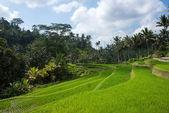 Rural Bali scenes — Stock Photo